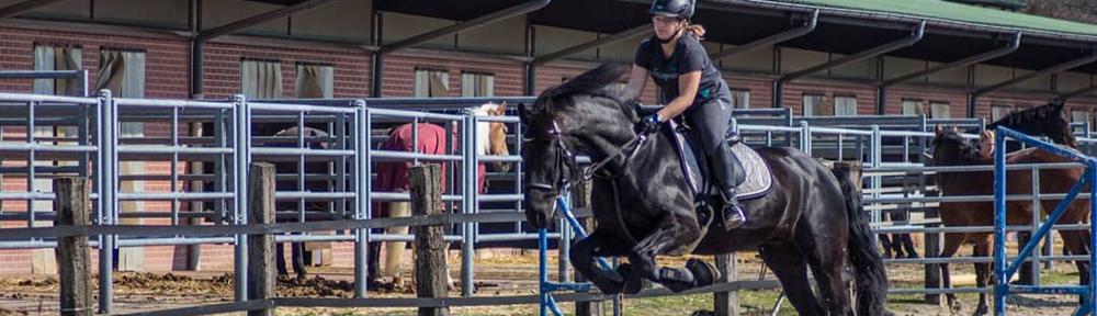 Kotwasser bei Pferden – ein Langzeit-Erfahrungsbericht